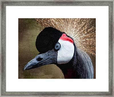 Grey - Crowned Crane Framed Print