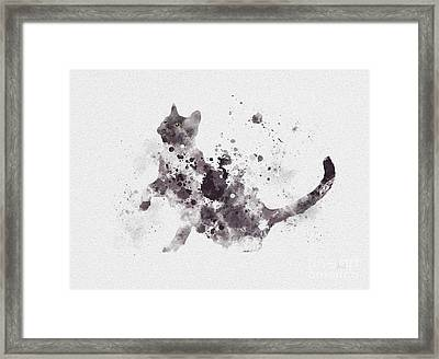Grey And White Cat Framed Print by Rebecca Jenkins