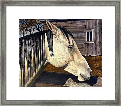 Grey Boy Framed Print by Bern Miller