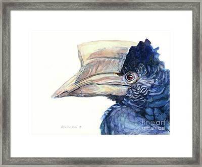 Grey-cheeked Hornbill Framed Print by Maria Kaprielian