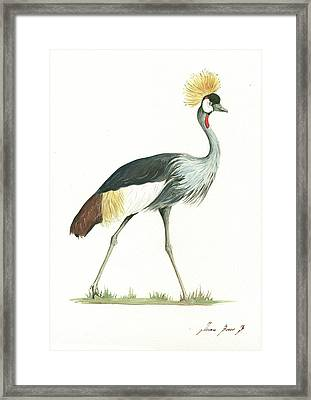 Grey Crowned Crane Framed Print by Juan Bosco