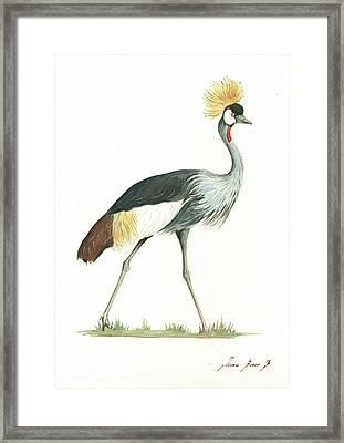 Grey Crowned Crane Framed Print
