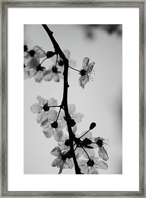 Grey Framed Print by Daniel Lih