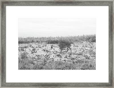 Grey Day On The Dunes  Framed Print