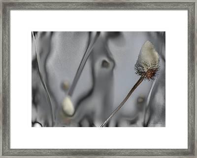 Grey Field Quantom.... Framed Print