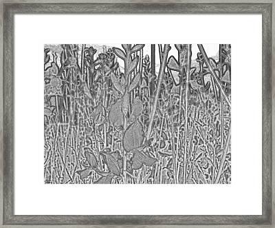 Grey Flowers Framed Print by Augusta Stylianou