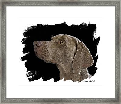 Grey Ghost Framed Print by Larry Linton