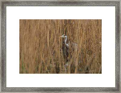 Grey Ghost Framed Print