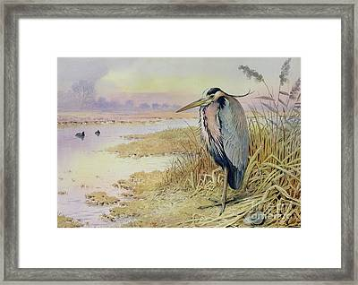 Grey Heron Framed Print by John James Audubon