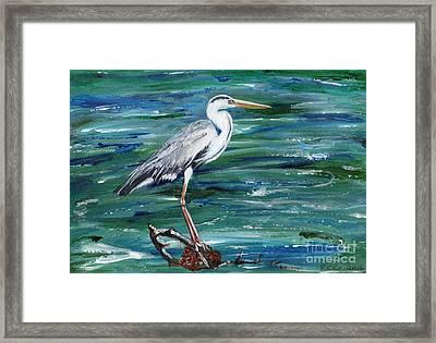 Grey Heron Of Cornwall -painting Framed Print