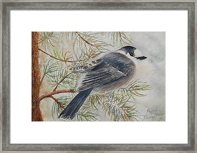 Grey Jay Framed Print