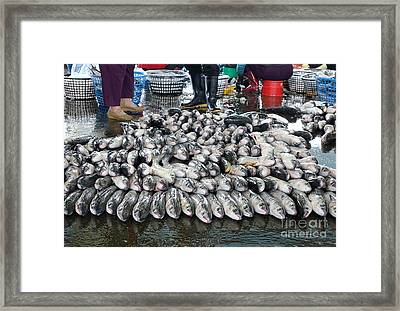 Grey Mullet Fish For Sale At The Fish Market Framed Print by Yali Shi