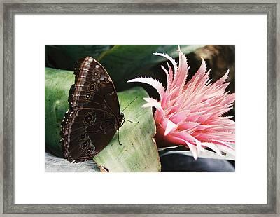 Grey Pansy Pink Bromeliad Framed Print