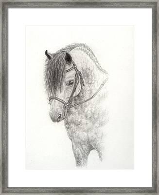 Grey Pony Framed Print