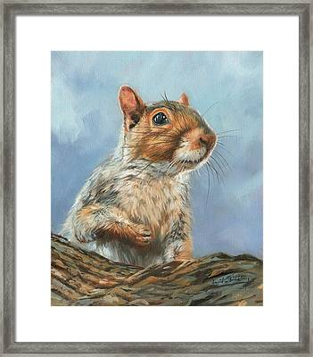 Framed Print featuring the painting Grey Squirrel by David Stribbling