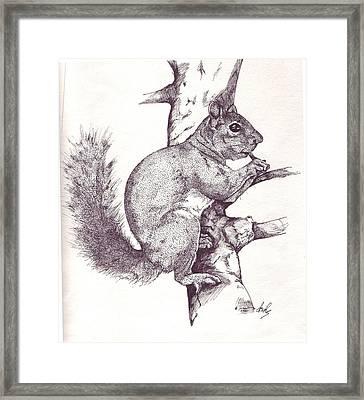 Grey Squirrel Framed Print by Debra Sandstrom