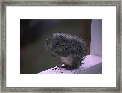 Grey Tree Squirrel Framed Print by Soli Deo Gloria Wilderness And Wildlife Photography