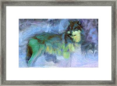 Grey Wolves In Snow Framed Print by Caito Junqueira