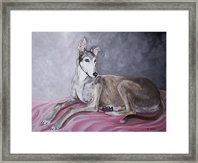 Greyhound At Rest Framed Print