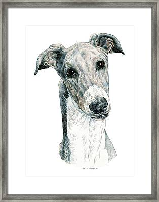 Greyhound Framed Print by Kathleen Sepulveda