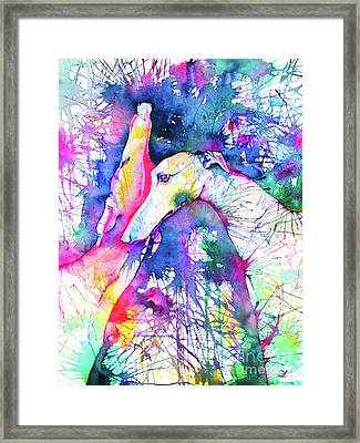 Greyhound Trance Framed Print by Zaira Dzhaubaeva