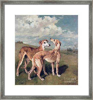Greyhounds Framed Print by John Emms