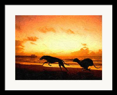 Greyhound Framed Prints