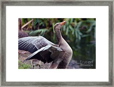 Greylag Goose Poetry Framed Print