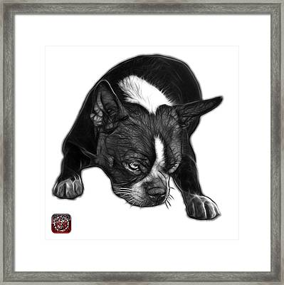 Greyscale Boston Terrier Art - 8384 - Wb Framed Print