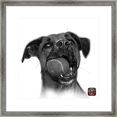 Greyscale Boxer Mix Dog Art - 8173 - Wb Framed Print