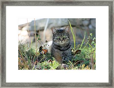 Greyson In Autumn Grass Framed Print