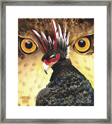 Griffin Sight Framed Print by Melissa A Benson
