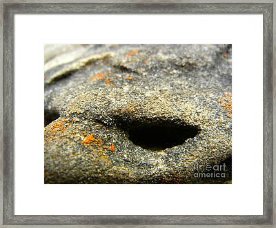 Griffin's Glare Framed Print by KD Johnson