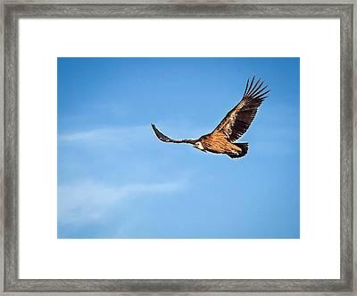 Framed Print featuring the photograph Griffon Vulture by Meir Ezrachi