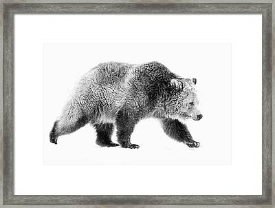 Griz On The Run Framed Print by Athena Mckinzie