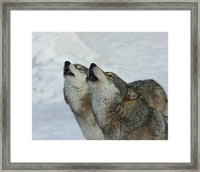 Grizzer And Maya Howling Framed Print by Gerry Sibell