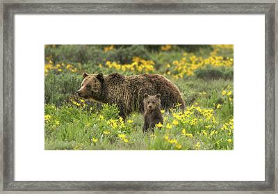 Grizzlies In The Wildflowers Framed Print