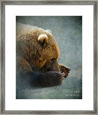 Grizzly Bear Lying Down Framed Print by Betty LaRue