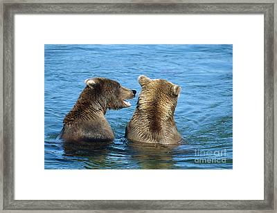 Grizzly Bear Talk Framed Print