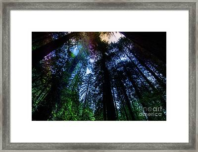 Grizzly Creek Redwood Grove Framed Print by Blake Webster