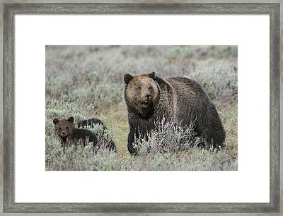 Grizzly Family Framed Print