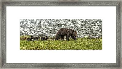 Framed Print featuring the photograph Grizzly Family by Yeates Photography