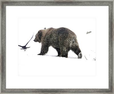 Framed Print featuring the photograph Grizzly by Meagan  Visser