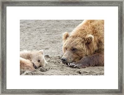 Framed Print featuring the photograph Grizzly Mom And Cub by Phil Stone