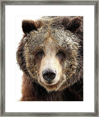 Grizzly Mug Framed Print by Athena Mckinzie