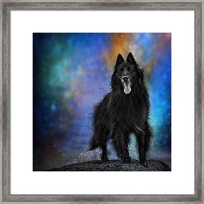 Belgian Sheepdog Artwork 4 Framed Print by Wolf Shadow  Photography