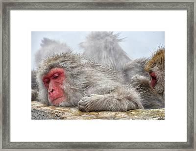 Grooming Framed Print