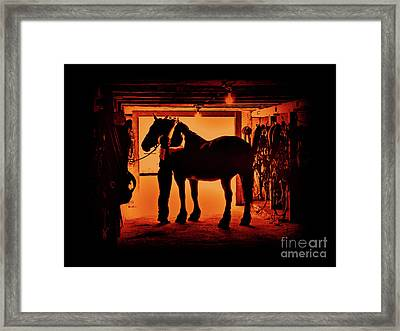 Grooming The Mighty Percheron Framed Print