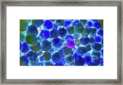 Ground Cherry Negative Framed Print