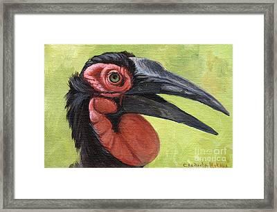 Ground Hornbill Framed Print by Svetlana Ledneva-Schukina